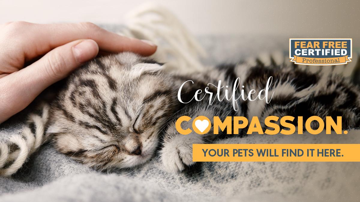 Gentle hand petting sleeping kitten