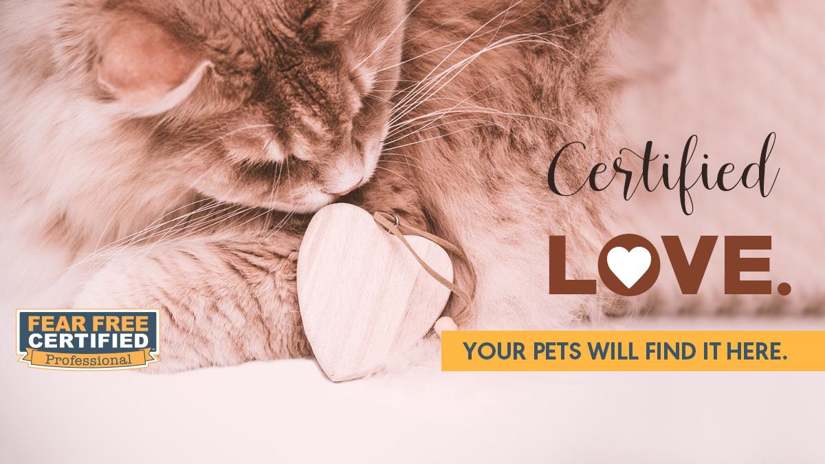 Kitten with toy heart