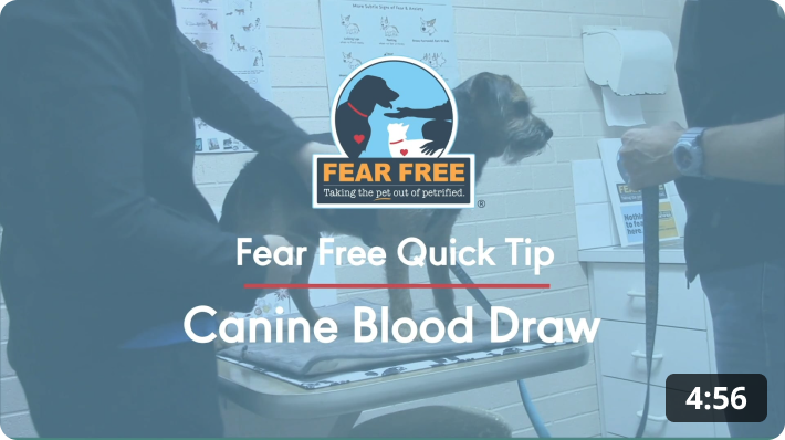Fear Free Quick Tip: Canine Blood Draw